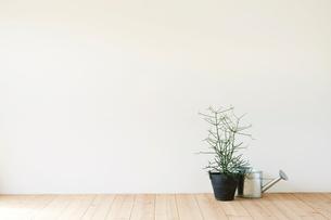 観葉植物とジョウロの写真素材 [FYI01604299]