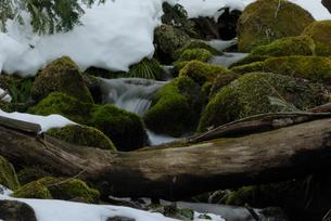 雪融けの奥大山の木谷沢渓流の写真素材 [FYI01604331]