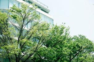 新緑の表参道の写真素材 [FYI01604384]
