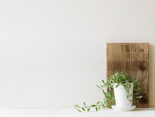 観葉植物と木の板の写真素材 [FYI01604434]