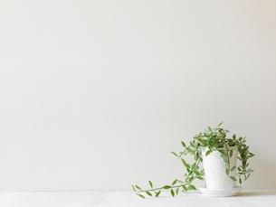 観葉植物の写真素材 [FYI01604445]
