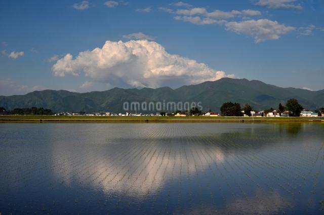 水田に映る空と雲の写真素材 [FYI01604510]