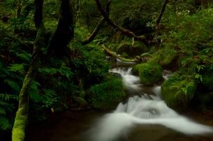 奥大山の木谷沢渓流の写真素材 [FYI01604593]
