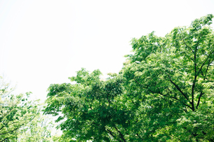 新緑の表参道の写真素材 [FYI01604609]