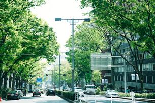 新緑の表参道の写真素材 [FYI01604612]