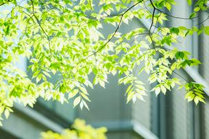 ビルと緑の写真素材 [FYI01604776]