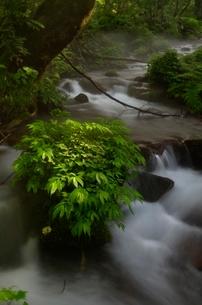奥大山の木谷沢渓流の写真素材 [FYI01604873]