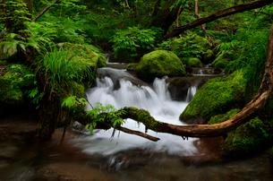 奥大山の木谷沢渓流の写真素材 [FYI01605045]