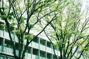新緑の表参道の写真素材 [FYI01605046]