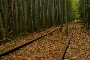 落ち葉が積もる廃線と竹林の写真素材 [FYI01605141]