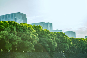 ビルと緑の写真素材 [FYI01605218]