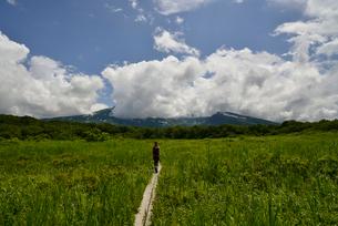 桑ノ木台湿原を歩く女性の写真素材 [FYI01605289]