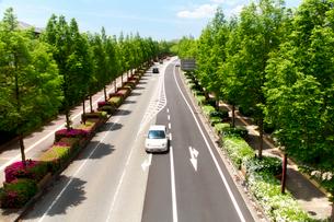 新緑の街路樹と車の写真素材 [FYI01605543]