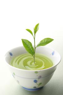 お茶の写真素材 [FYI01606362]