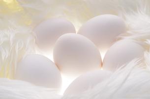 卵の写真素材 [FYI01606683]