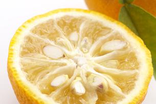 柚子の写真素材 [FYI01606873]