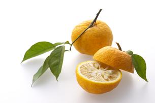 柚子の写真素材 [FYI01606901]