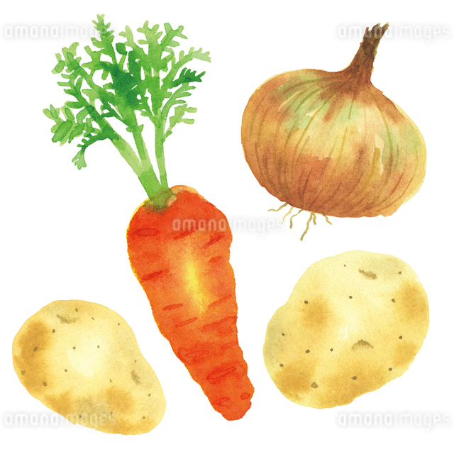 カレーの野菜のイラスト素材 [FYI01607022]