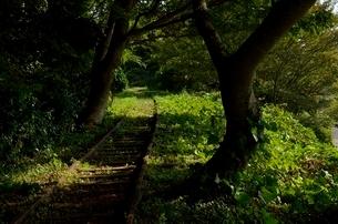廃線に生える木々の写真素材 [FYI01607041]