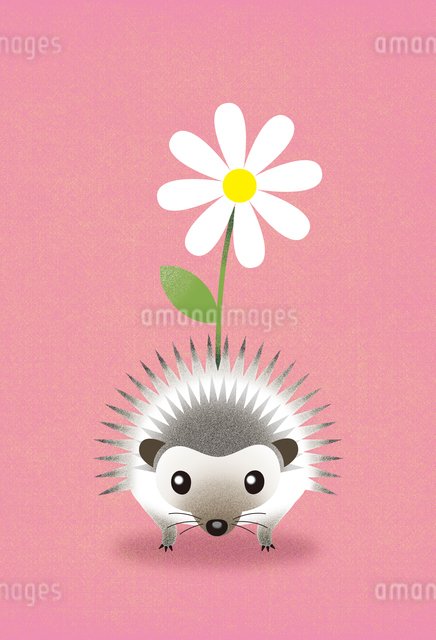 はりねずみの花かざりのイラスト素材 [FYI01607091]