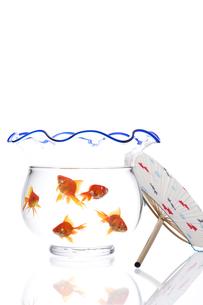 金魚鉢とうちわの写真素材 [FYI01607428]