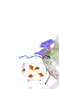 金魚鉢とうちわの写真素材 [FYI01607496]