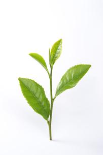 茶葉の写真素材 [FYI01607640]