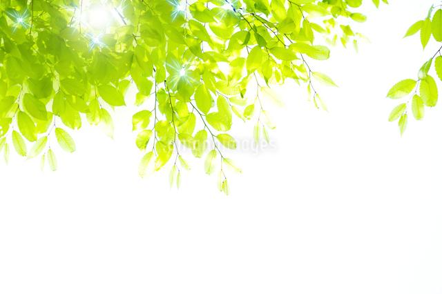 新緑の写真素材 [FYI01607827]