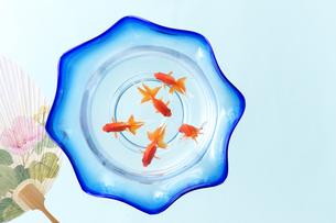 金魚鉢とうちわの写真素材 [FYI01607922]