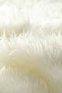 白いファーの写真素材 [FYI01608020]