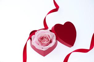 薔薇とハート型のギフトボックスの写真素材 [FYI01608299]