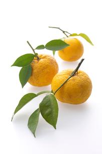 柚子の写真素材 [FYI01608443]