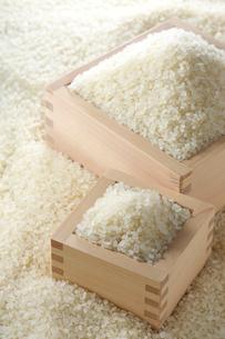 米と枡の写真素材 [FYI01608692]