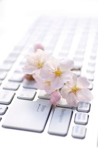 パソコンと桜の写真素材 [FYI01609153]