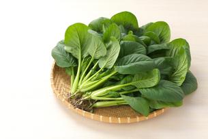 小松菜の写真素材 [FYI01609190]