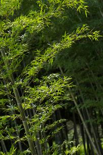 竹林の写真素材 [FYI01609209]