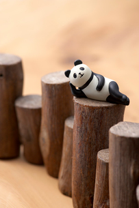 パンダの写真素材 [FYI01609318]