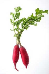 紅化粧大根の写真素材 [FYI01609511]