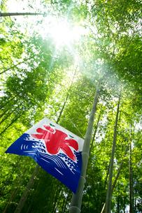氷の旗と竹林の写真素材 [FYI01609668]