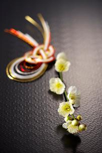 梅と水引の写真素材 [FYI01609669]