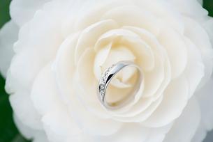 結婚指輪と椿の写真素材 [FYI01609716]