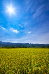 稲穂と耳納連山の写真素材 [FYI01609796]