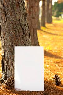 ホワイトボードの写真素材 [FYI01609854]