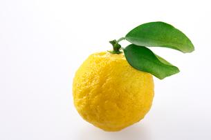 柚子の写真素材 [FYI01609933]