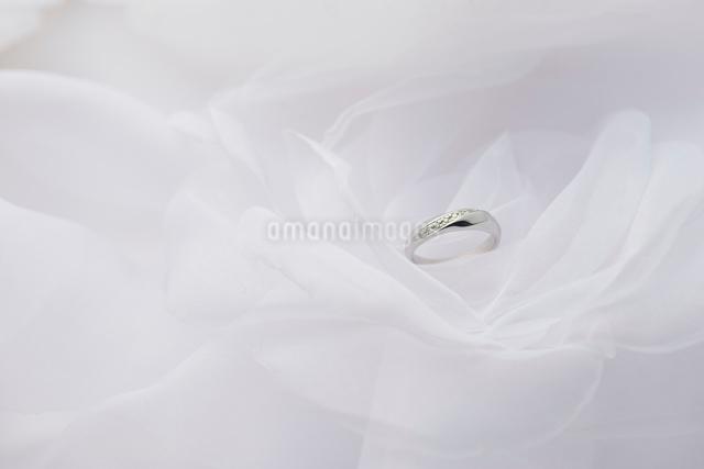 結婚指輪の写真素材 [FYI01610035]