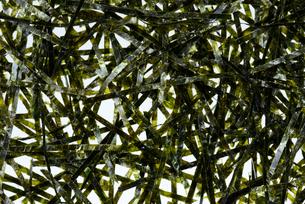 海苔の写真素材 [FYI01610147]