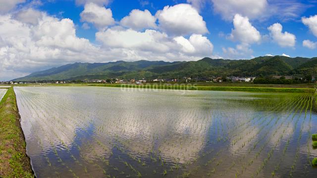 水田と耳納連山の写真素材 [FYI01610173]