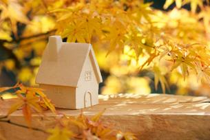 ミニチュアハウスと紅葉の写真素材 [FYI01610515]