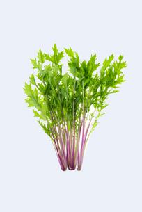 赤水菜の写真素材 [FYI01610621]