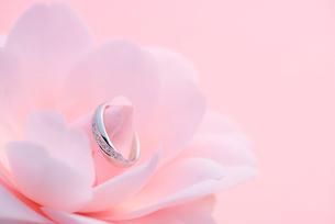 結婚指輪と椿の写真素材 [FYI01610682]